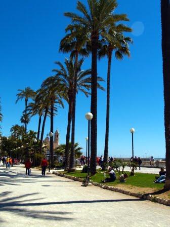 palmtrees_alongstreet_comp